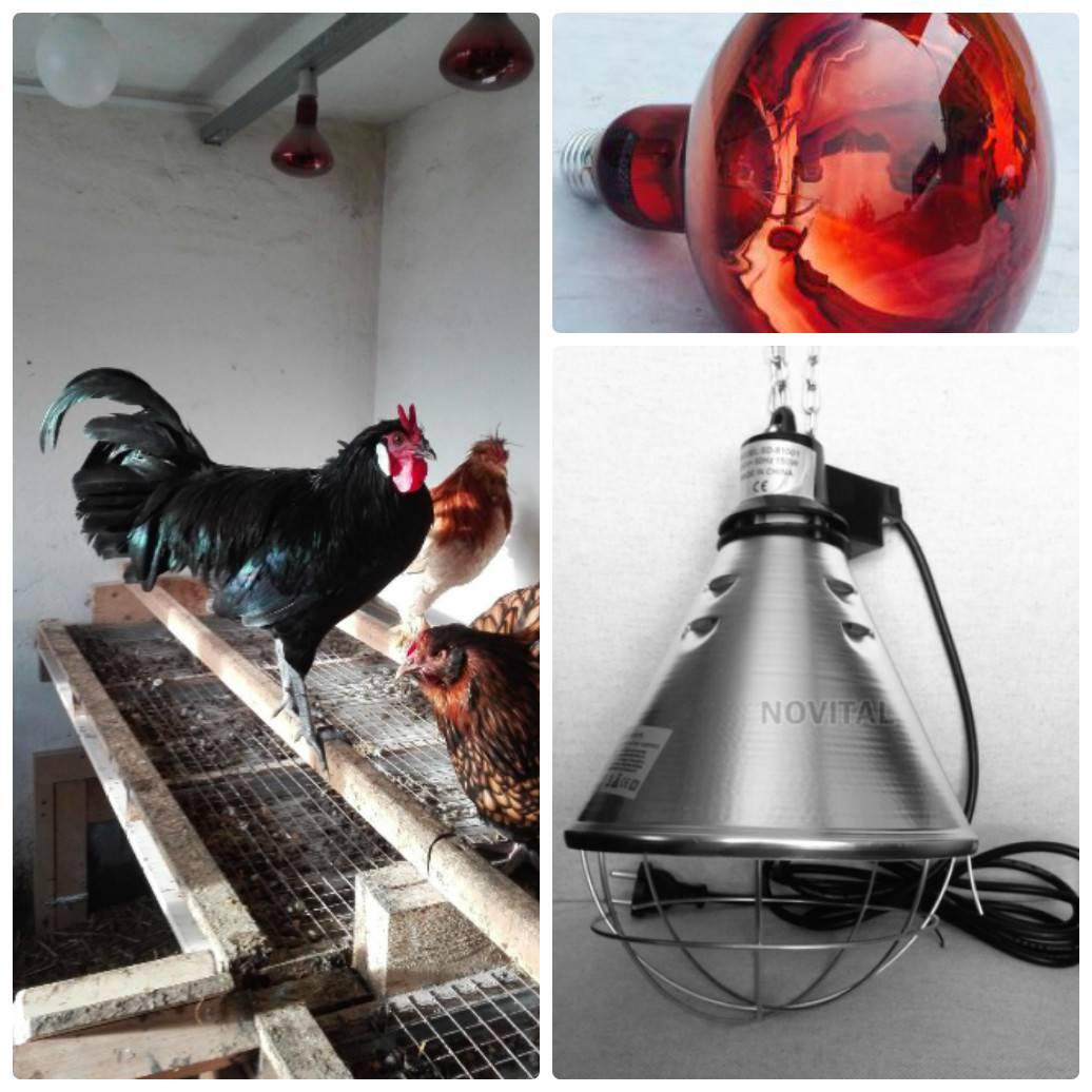 Инфракрасный обогрев в курятник – советы и отзывы