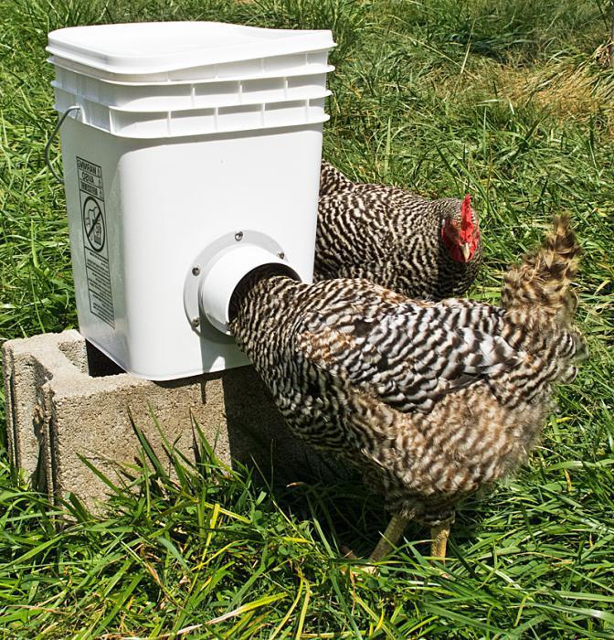 Поилки для цыплят своими руками: виды, изготовление