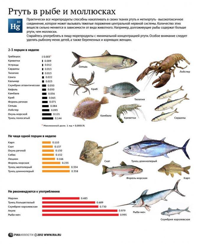 Можно ли давать курам сырую или вареную рыбу? Как кормить рыбой бройлеров и цыплят
