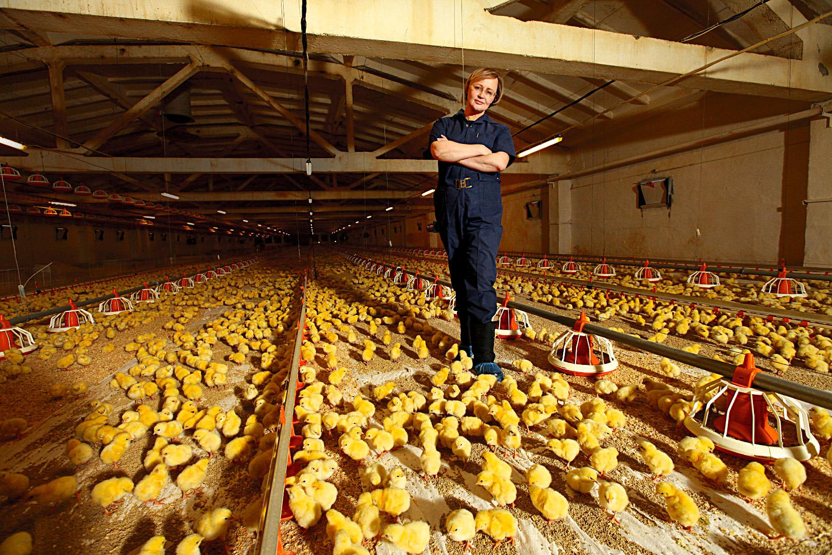 Собственная птицеферма и 5 правил успешного запуска