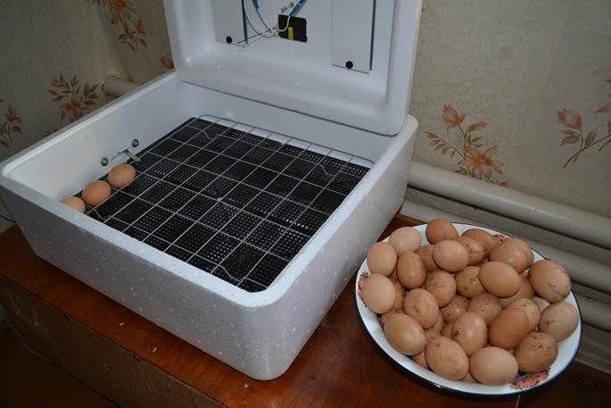 Инкубатор для выведения цыплят – какой купить?
