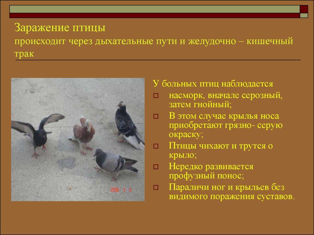 Гиракса – инструкция по применению в ветеринарии, характеристика препарата