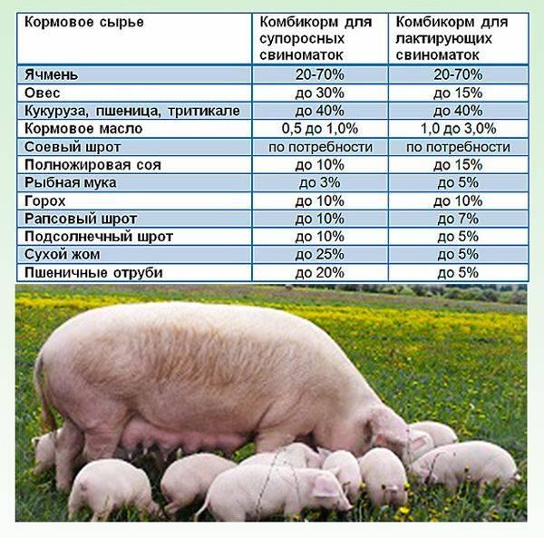 Можно ли куриный комбикорм давать свиньям?