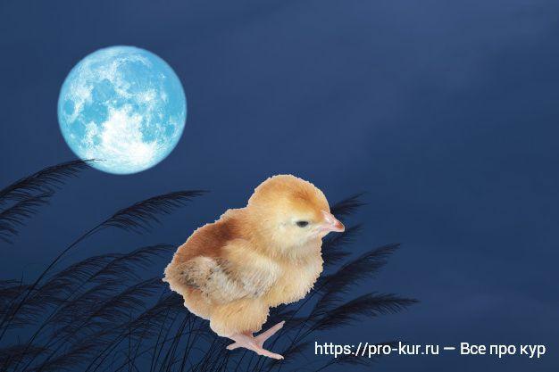 Лунный календарь на 2020год для выведения цыплят