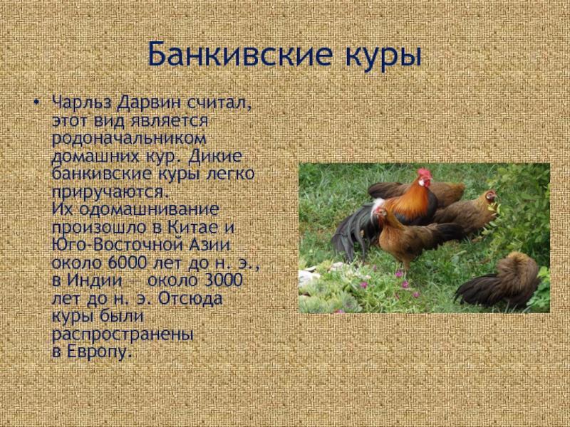 Домашние куры и родственники домашних кур