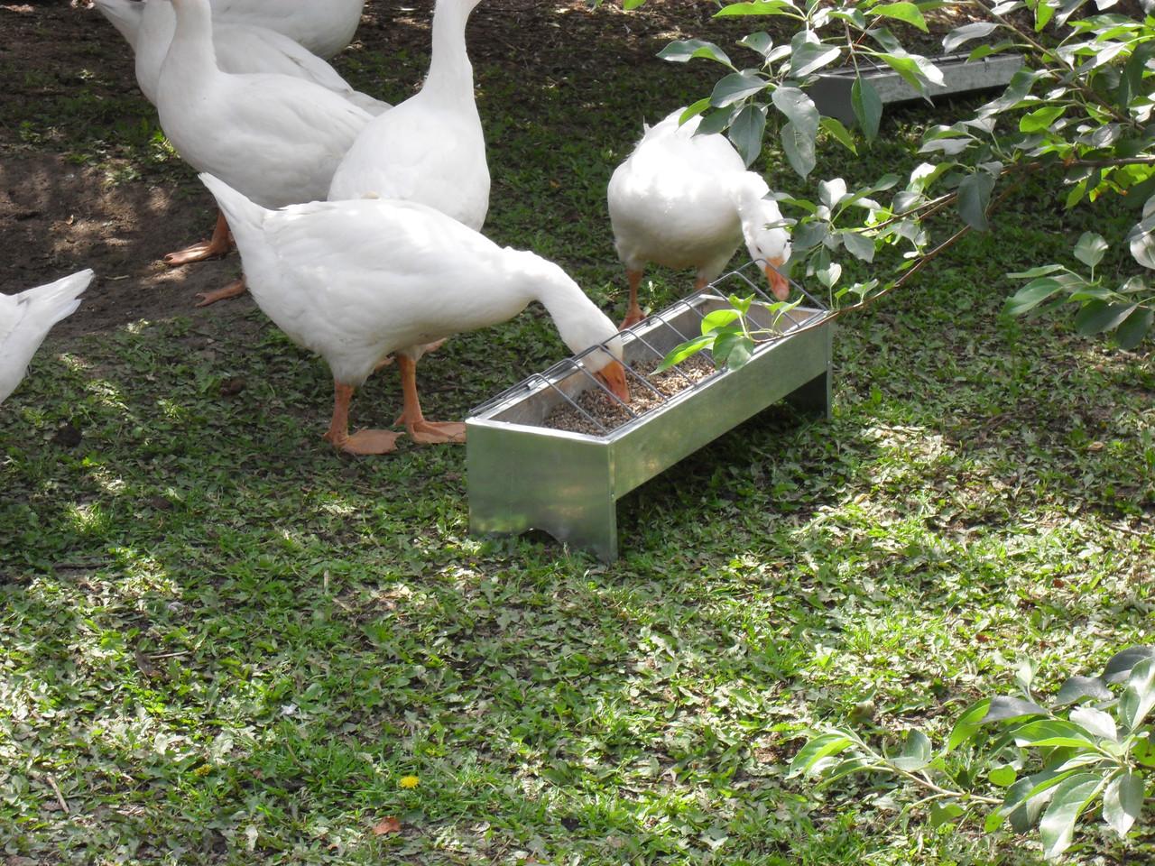 Кормушки для гусей – какие бывают, как сделать своими руками