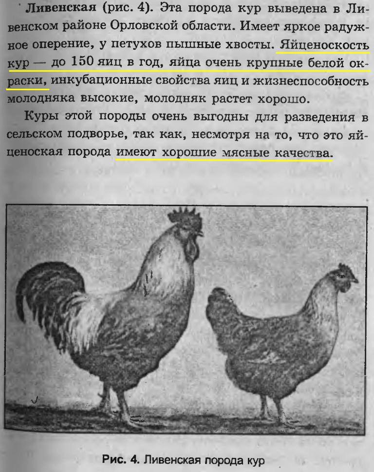 Ливенская - мясо-яичная порода кур. Описание, характеристики, выращивание, кормление и инкубация