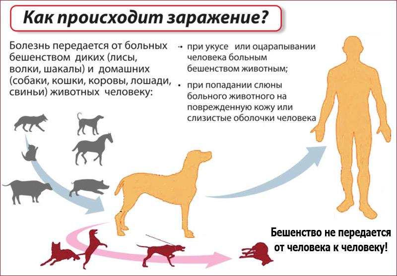 Болезни кур, опасные для человека: чем можно заразиться от птицы и как себя обезопасить?