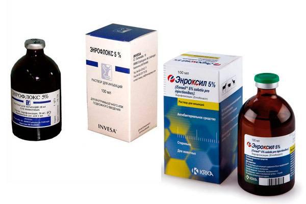 Для чего нужны антибиотики для бройлеров