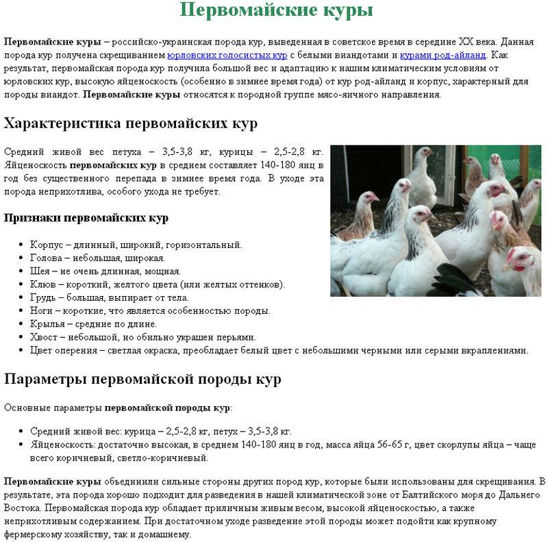 Кревкер - мясо-яичная порода кур. Описание, характеристики, разведение и содержание, кормление