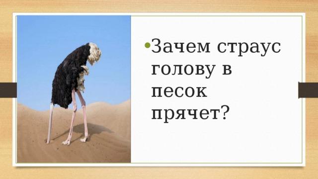 Прячет ли страус голову в песок: распространенные мифы