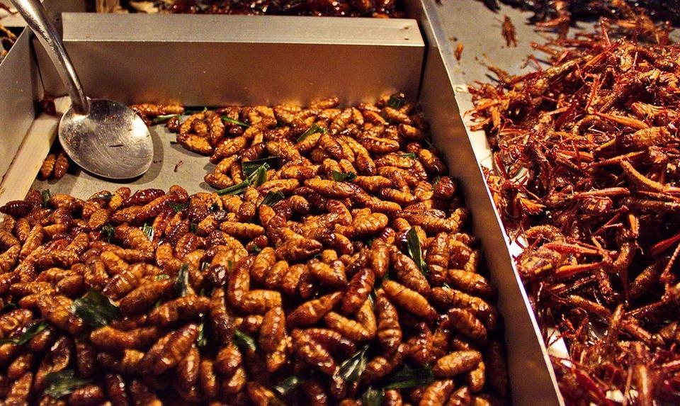 Жуки на гриле и печенье из саранчи скоро заменят курицу?