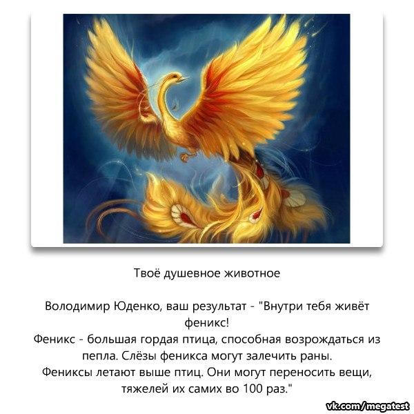 Порода голубей драконы: летные и декоративные характеристики