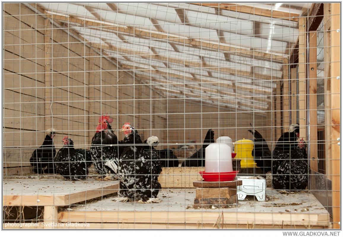 Биономика строительства птичника