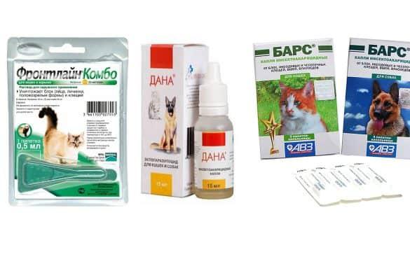 Лечение куриных блох, вшей и клещей без химии естественным путем