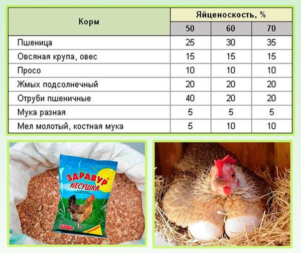 Чем можно и не нужно кормить несушек для получения качественных яиц