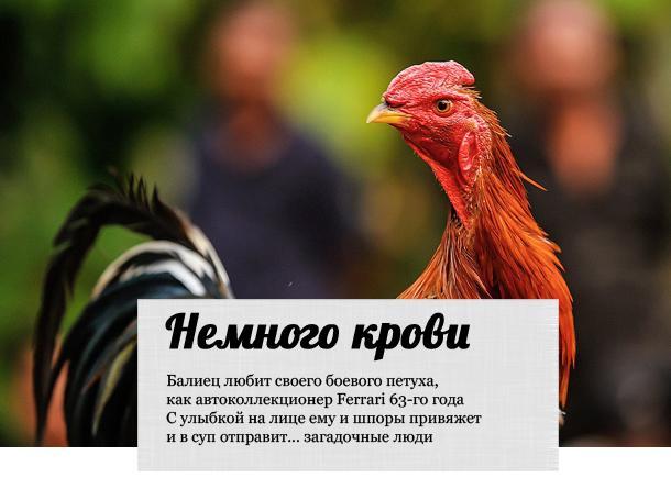 Почему петух перестал кукарекать и топтать кур: в чем дело и как лечить птицу?