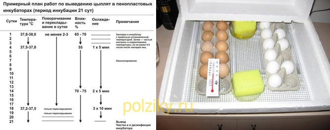 Какая должна быть температура в инкубаторе для куриных яиц