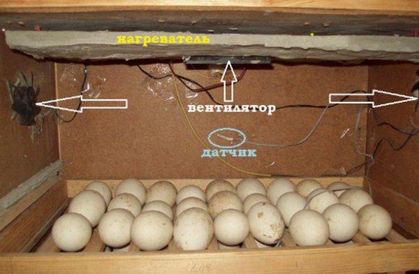 Что делать, если в инкубаторе треснуло яйцо: вылупится ли из него цыпленок?