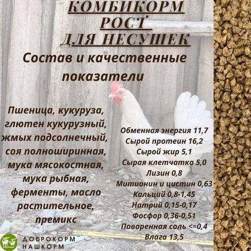 Кормление кур несушек льняными семенами