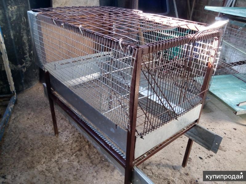 Клетки для кур, перепелов, кроликов продают аферисты