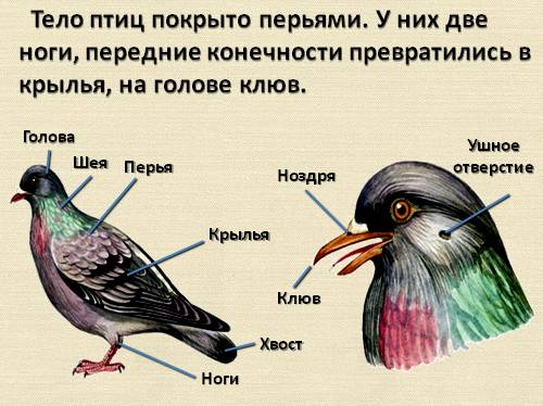 Как видят курицы: какое у них зрение и различают ли куры цвета