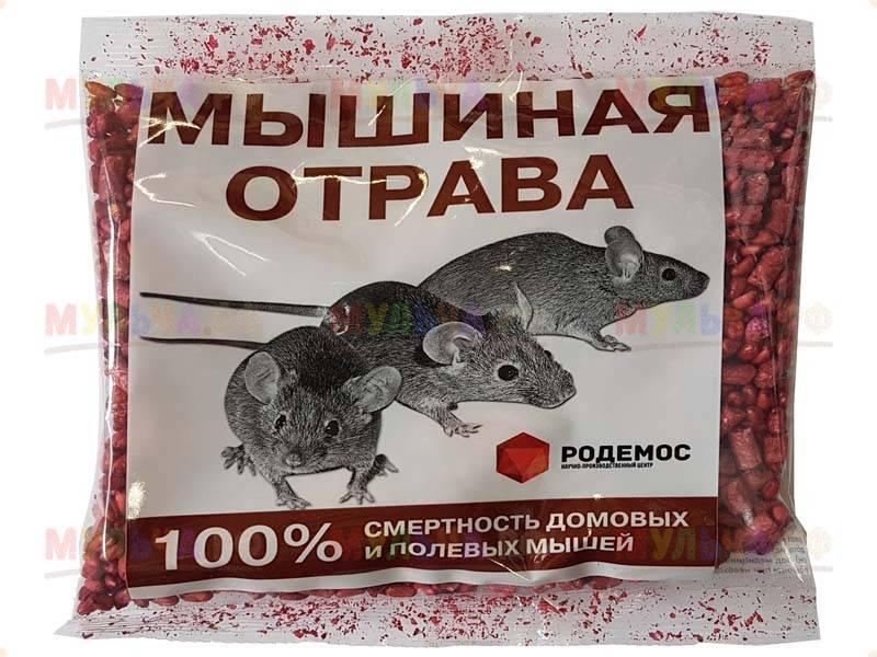 Как использовать крысиный яд в курятнике и на участке