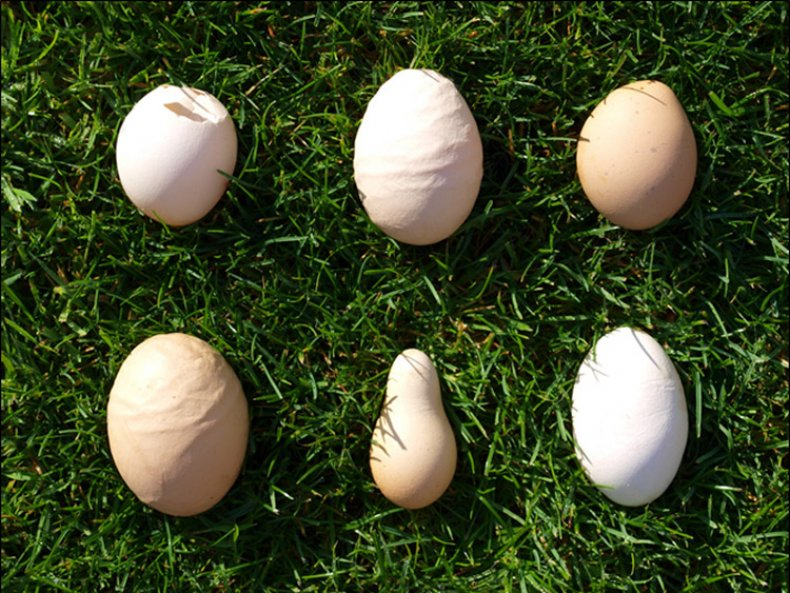 Почему куры несут яйца с мягкой скорлупой