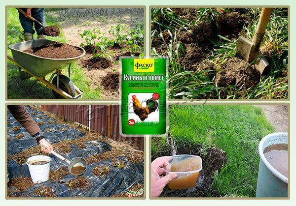 Как использовать куриный помет для удобрения?