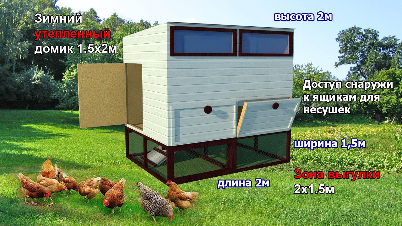 Содержание кур зимой: как подготовить курятник, можно ли выпускать птиц на улицу, как и чем их кормить?