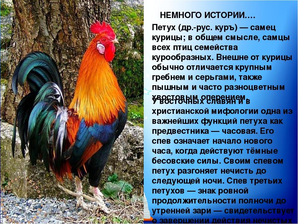 Петух петушок — золотой гребешок, ласкова головушка…