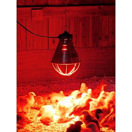 Применение инфракрасной лампы для цыплят