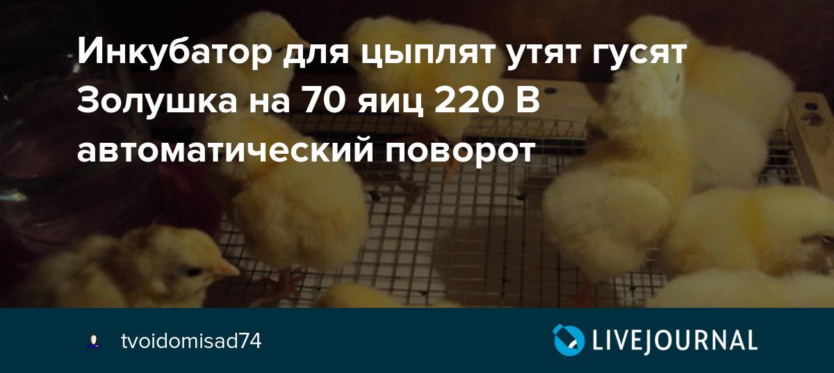 Вывод цыплят в инкубаторе в домашних условиях: отбор и закладка яиц, режимы температуры и влажности, ошибки