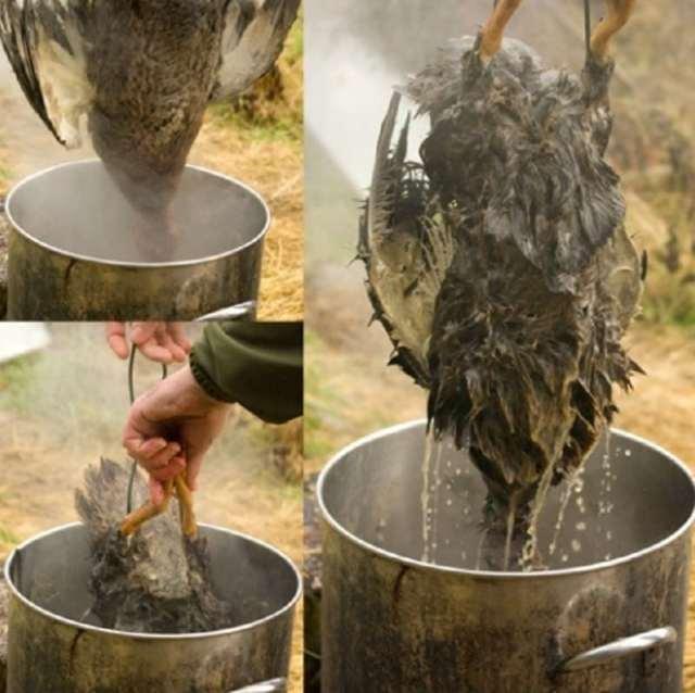 Полезные и эффективные методы как ощипать гуся быстро