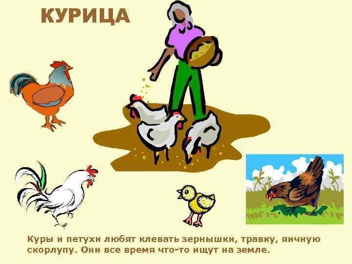 Про курочек и петушка – история из жизни