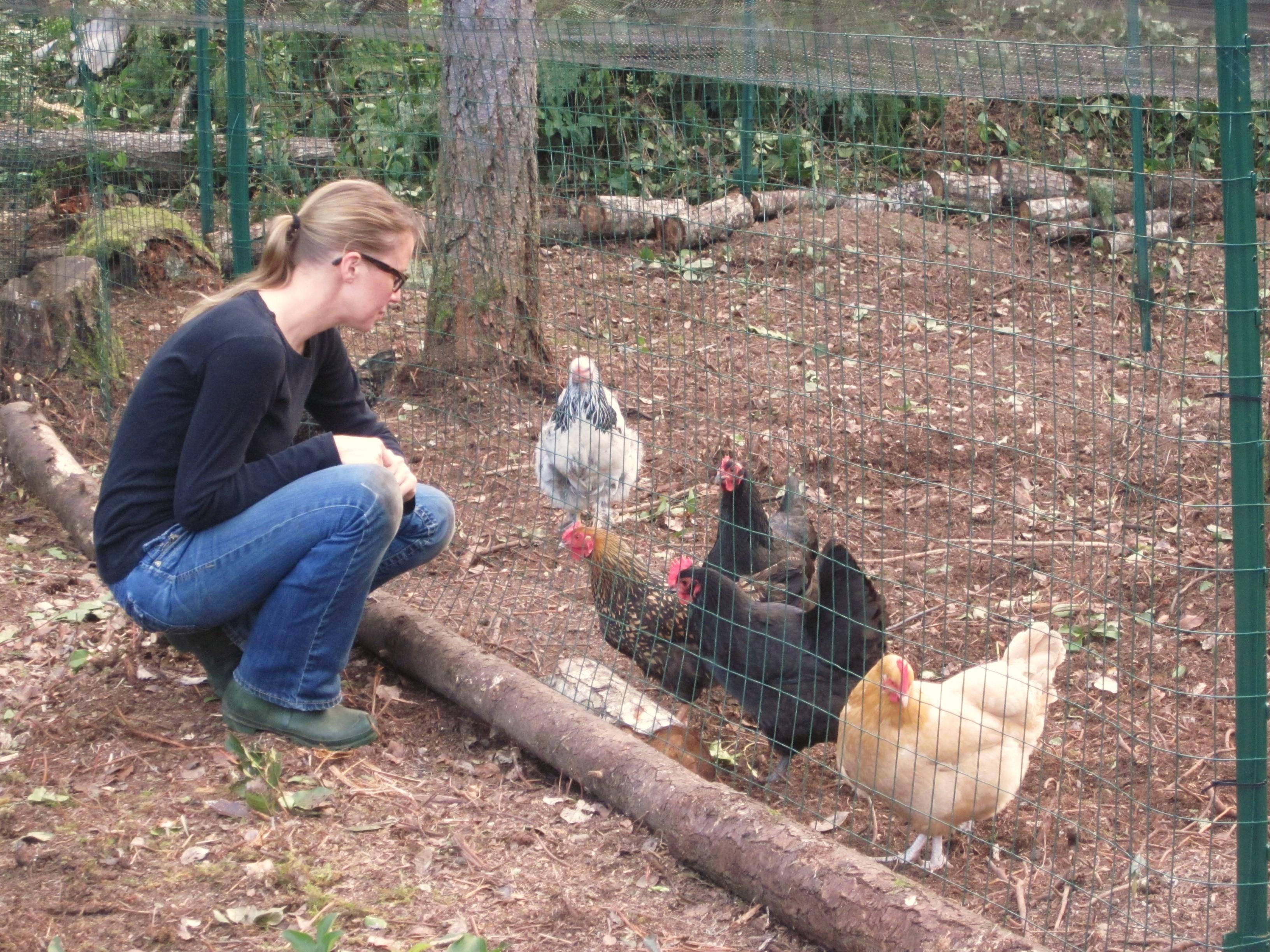 Как выбрать породу кур для содержания на даче