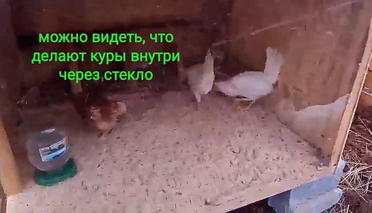 Апрель в курятнике и забота о курах