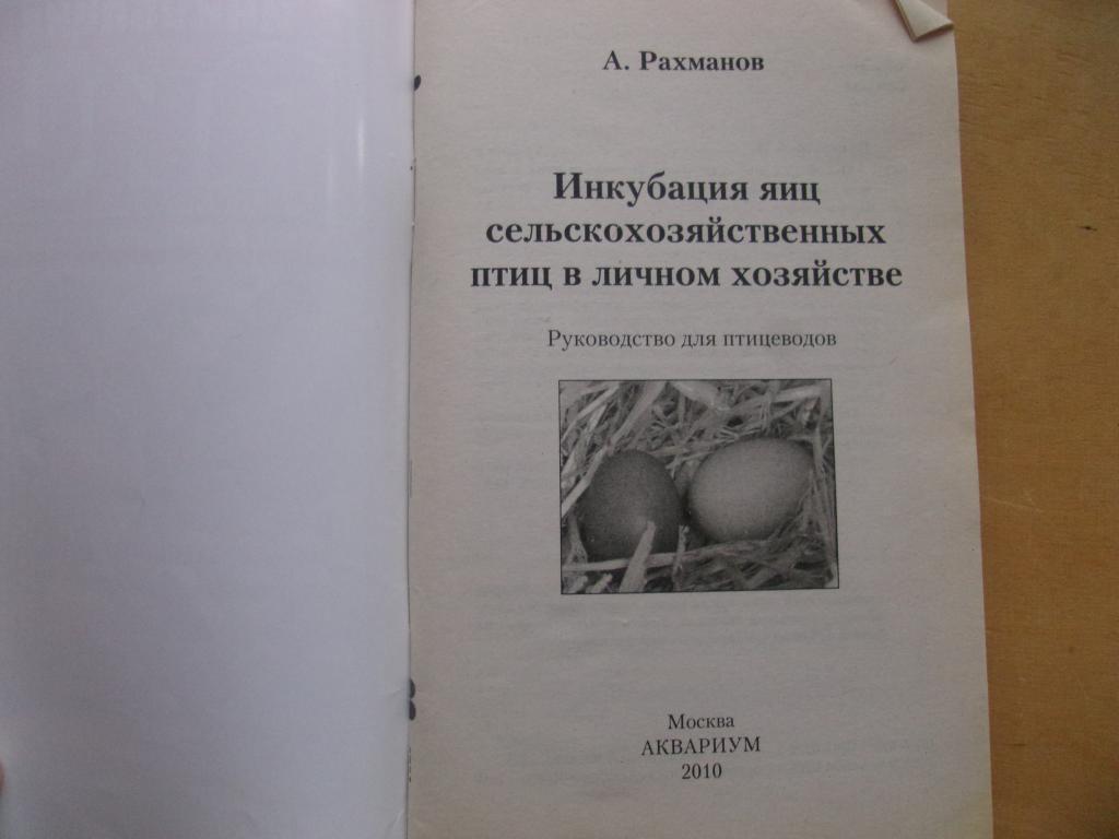 Инкубация яиц домашней птицы, как бизнес в деревне