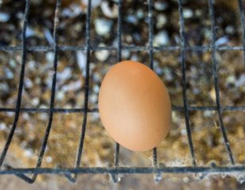 7 советов, как предотвратить расклев яиц несушками