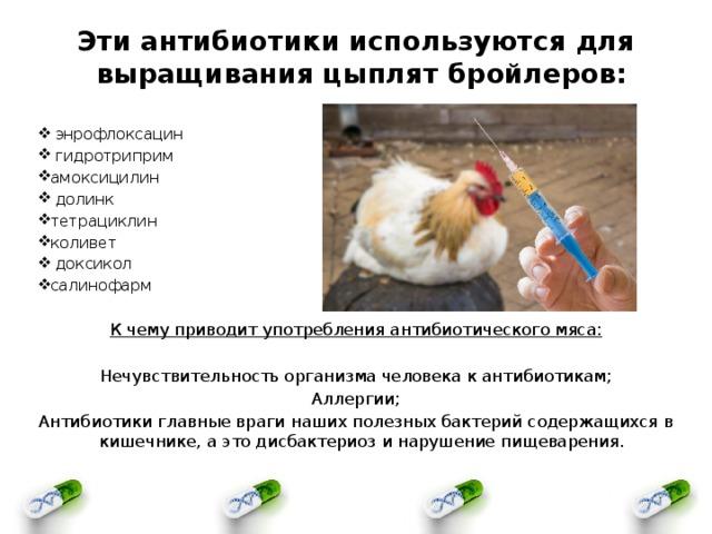 Профилактика заболеваний у индюшат: какие антибиотики давать