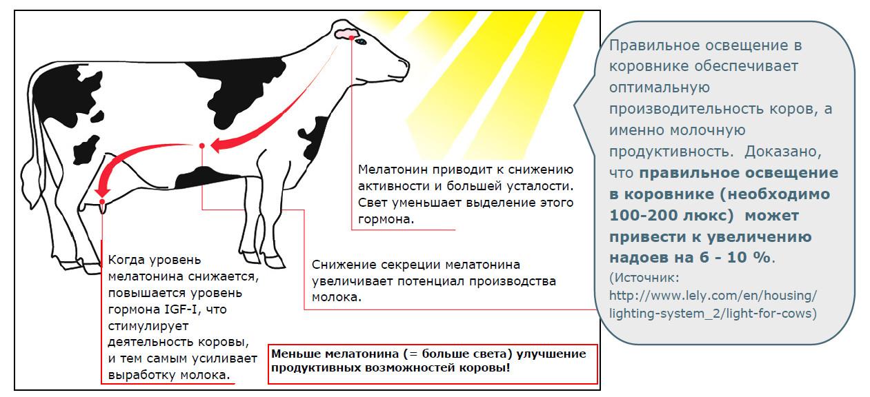 Куры Мастер грей - мясо-яичный кросс. Описание, уход и кормление, нюансы выращивания, инкубация