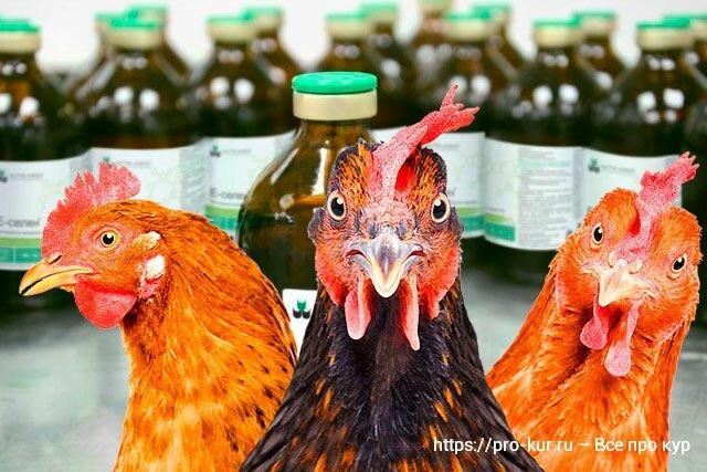 Е-селен для кур и птиц – инструкция по применению