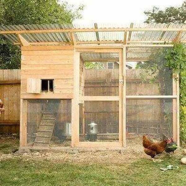 Стоит ли заводить кур во дворе или на даче – 8 преимуществ