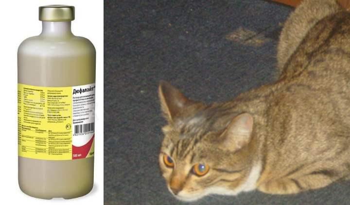 Дюфалайт – инструкция по применению для животных, противопоказания