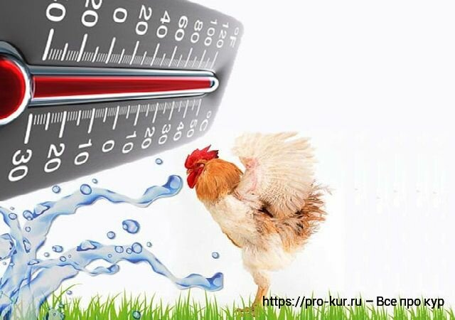 Стрессы у кур несушек: тепловой, кормовой, химический