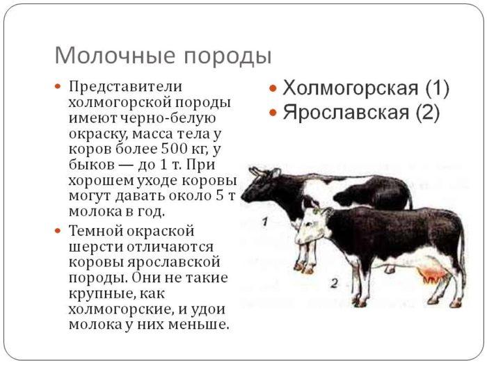 Галан - мясо-яичная порода кур. Описание, выращивание, кормление и инкубация