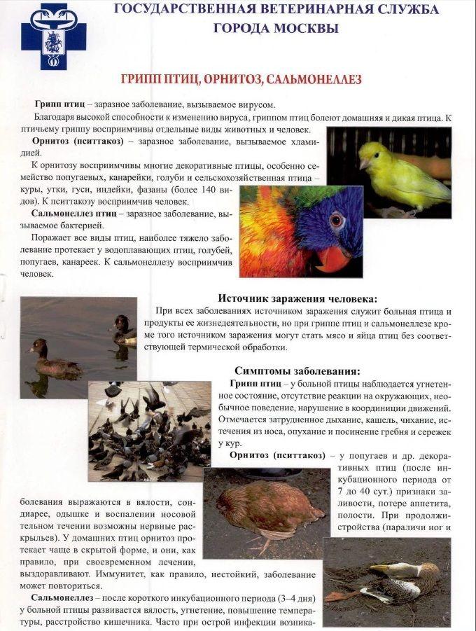 Доксатиб: подробная инструкция по применению в ветеринарии