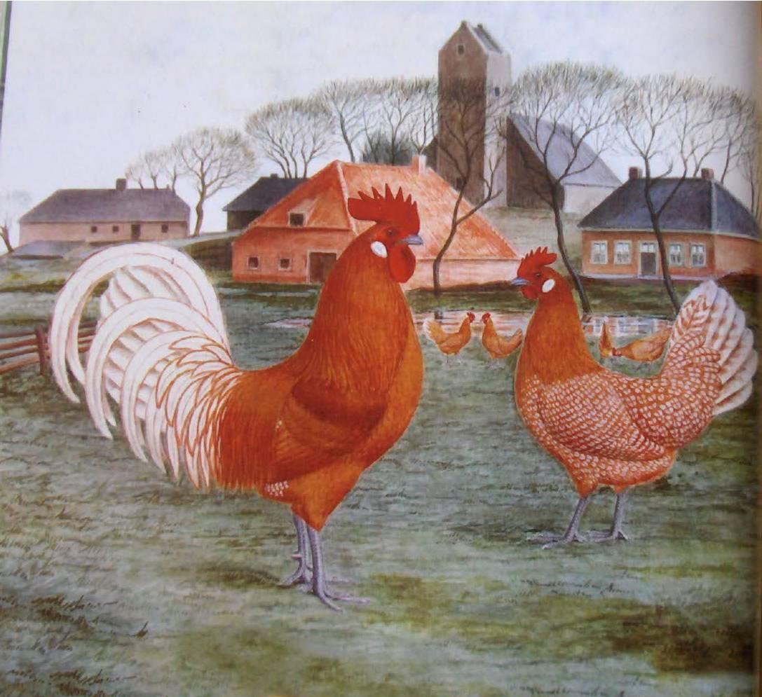 Остфризская чайка - мясо-яичная порода кур. Описание, характеристики, выращивание и разведение, инкубация