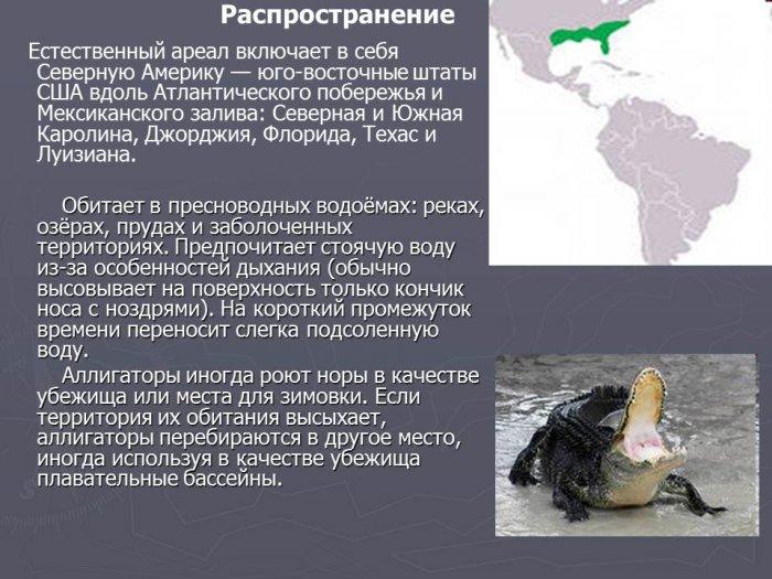 Любительница соленых вод – северная утка Гага