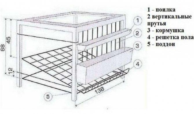 Клеточное содержание кур-несушек: выбор породы, правила их размещения и особенности кормления